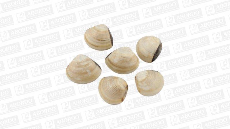 Almejas Finas (Vietnam) (IQF) (40/60 pzas./kg)
